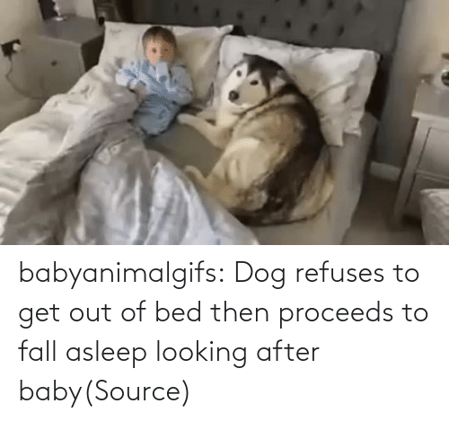 Fall: babyanimalgifs:  Dog refuses to get out of bed then proceeds to fall asleep looking after baby(Source)