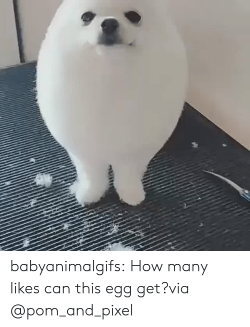 Instagram, Target, and Tumblr: babyanimalgifs:  How many likes can this egg get?via @pom_and_pixel