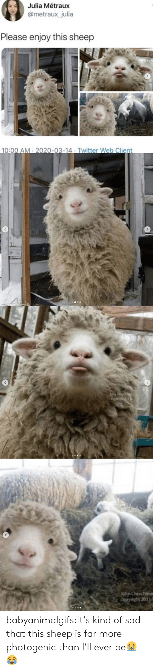 Sad: babyanimalgifs:It's kind of sad that this sheep is far more photogenic than I'll ever be😭😂