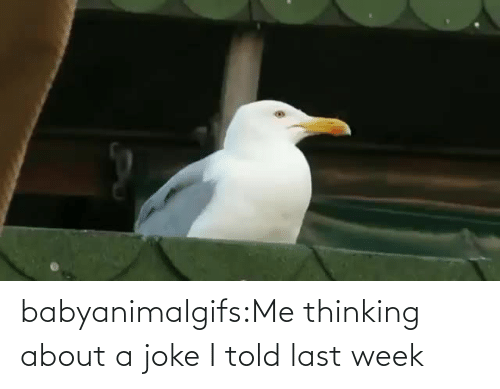 About: babyanimalgifs:Me thinking about a joke I told last week