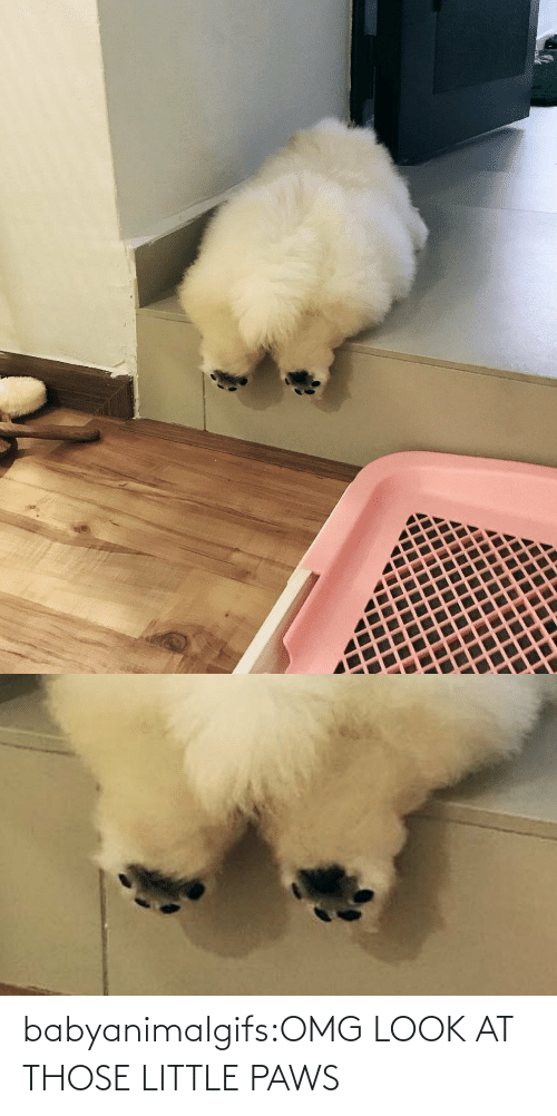 Look At: babyanimalgifs:OMG LOOK AT THOSE LITTLE PAWS