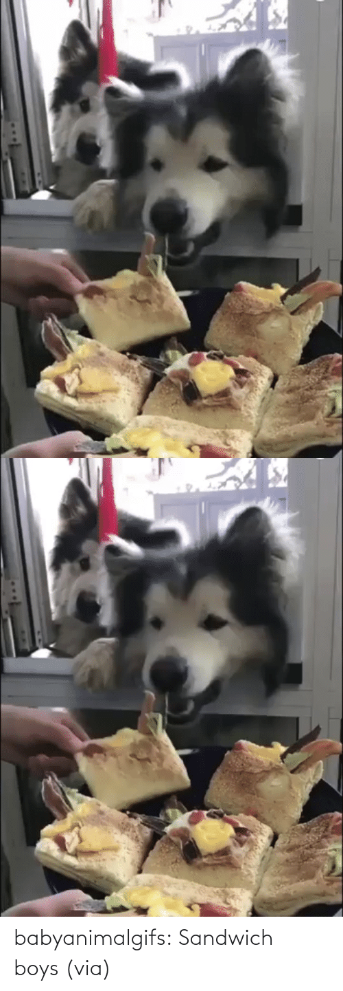 Got Me: babyanimalgifs:  Sandwich boys (via)