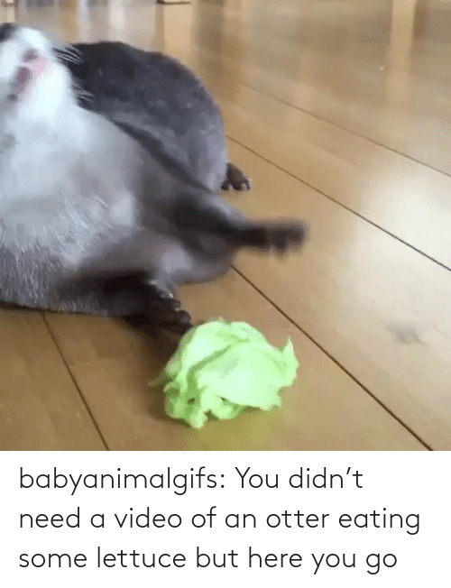 You Go: babyanimalgifs:  You didn't need a video of an otter eating some lettuce but here you go