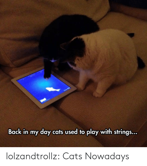 Cats, Tumblr, and Blog: Back in my day cats used to play with strings... lolzandtrollz:  Cats Nowadays