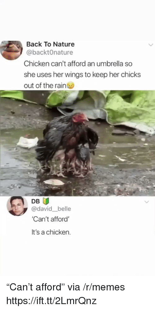 "Memes, Chicken, and Nature: Back To Nature  @backtOnature  Chicken can't afford an umbrella so  she uses her wings to keep her chicks  out of the rain  DB U  @david belle  Can't afford'  It's a chicken. ""Can't afford"" via /r/memes https://ift.tt/2LmrQnz"