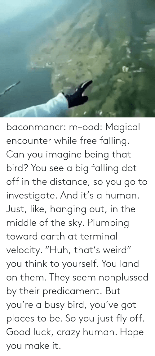 "You Go: baconmancr:  m–ood: Magical encounter while free falling.  Can you imagine being that bird? You see a big falling dot off in the distance, so you go to investigate. And it's a human. Just, like, hanging out, in the middle of the sky. Plumbing toward earth at terminal velocity.  ""Huh, that's weird"" you think to yourself.  You land on them. They seem nonplussed by their predicament. But you're a busy bird, you've got places to be. So you just fly off. Good luck, crazy human. Hope you make it."