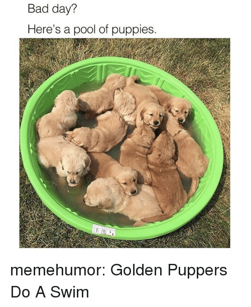 Bad, Bad Day, and Puppies: Bad day?  Here's a pool of puppies memehumor:  Golden Puppers Do A Swim