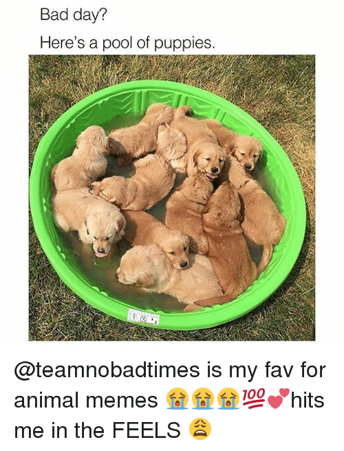 Bad, Bad Day, and Memes: Bad day?  Here's a pool of puppies. @teamnobadtimes is my fav for animal memes 😭😭😭💯💕hits me in the FEELS 😩