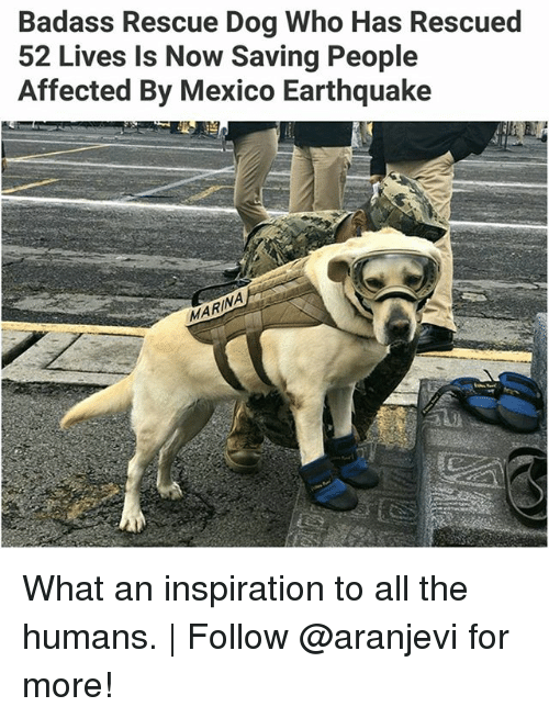 Memes, Earthquake, and Mexico: Badass Rescue Dog Who Has Rescued  52 Lives Is Now Saving People  Affected By Mexico Earthquake  NA What an inspiration to all the humans. | Follow @aranjevi for more!
