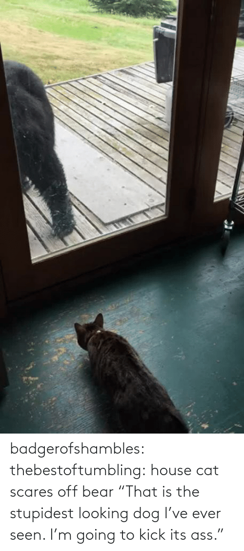"Bear: badgerofshambles:  thebestoftumbling:  house cat scares off bear  ""That is the stupidest looking dog I've ever seen. I'm going to kick its ass."""