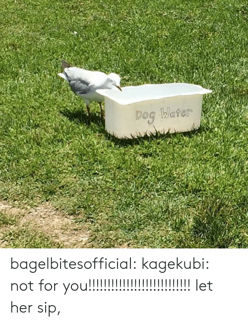Tumblr, Blog, and Http: bagelbitesofficial:  kagekubi:  not for you!!!!!!!!!!!!!!!!!!!!!!!!!!!  let her sip,