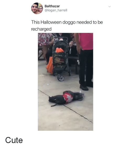 Cute, Halloween, and Memes: Balthazar  @logan_harrell  This Halloween doggo needed to be  recharged Cute