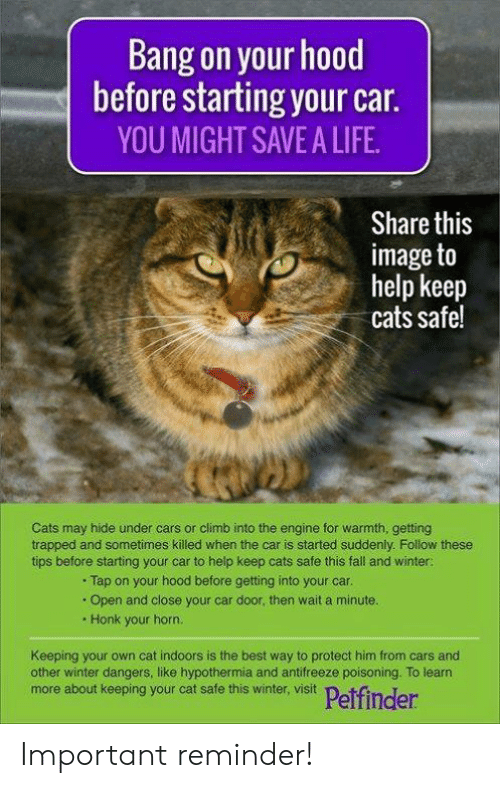 Cars, Cats, and Fall: Bang on your hood  before starting your car.  YOU MIGHT SAVE A LIFE.  Share this  image to  help keep  cats safe!  Cats may hide under cars or climb into the engine for warmth, getting  trapped and sometimes killed when the car is started suddenly. Follow these  tips before starting your car to help keep cats safe this fall and winter:  .Tap on your hood before getting into your car.  .Open and close your car door, then wait a minute.  Honk your horn.  Keeping your own cat indoors is the best way to protect him from cars and  other winter dangers, like hypothermia and antifreeze poisoning. To learn  more about keeping your cat safe this winter, visit  Petfinder Important reminder!