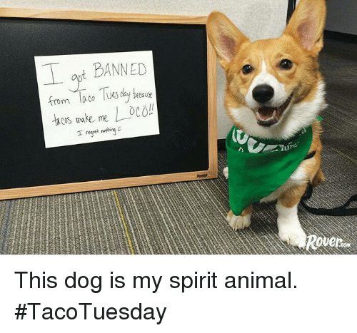 Regret, Animal, and Spirit: BANNED  from Taco Tus day  COS, make me  I regret nothing This dog is my spirit animal. #TacoTuesday