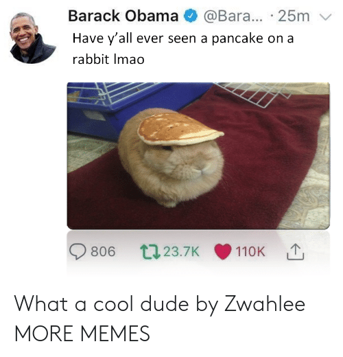Dank, Dude, and Memes: Barack Obama @Bara... 25m  Have y'all ever seen a pancake on a  rabbit Imao  806 023.7K 110K What a cool dude by Zwahlee MORE MEMES