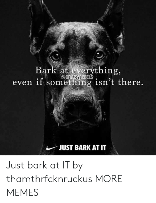 Dank, Memes, and Target: Bark at everything,  even if something isn't there.  BELS  JUST BARK AT IT Just bark at IT by thamthrfcknruckus MORE MEMES