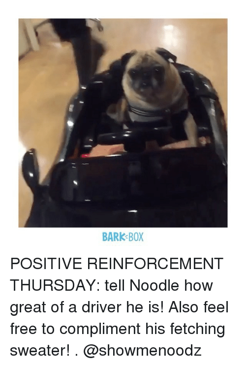 Feeling Free: BARK BOX POSITIVE REINFORCEMENT THURSDAY: tell Noodle how great of a driver he is! Also feel free to compliment his fetching sweater! . @showmenoodz