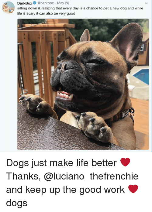 Dogs, Life, and Memes: BarkBox @barkbox May 20  sitting down & realizing that every day is a chance to pet a new dog and while  life is scary it can also be very good Dogs just make life better ❤️ Thanks, @luciano_thefrenchie and keep up the good work ❤️ dogs