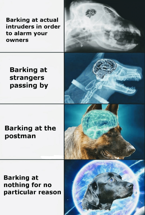 Alarm, Reason, and Intruders: Barking at actual  intruders in order  to alarm your  owners  Barking at  strangers  passing by  Barking at the  postman  Barking at  nothing for no  particular reason