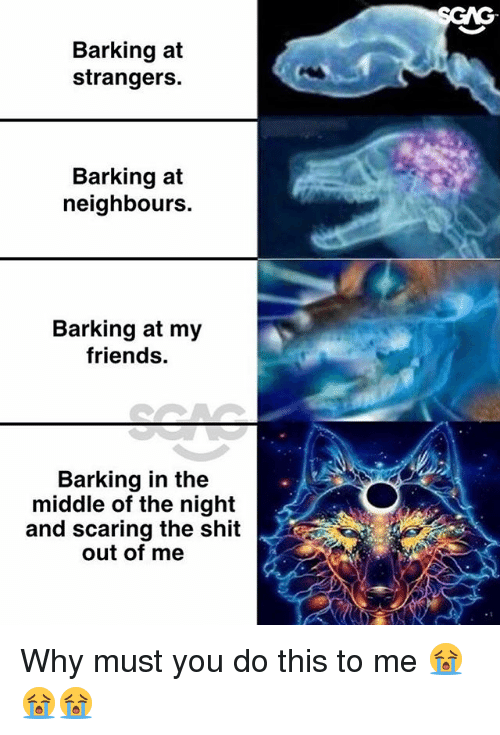 Friends, Memes, and Shit: Barking at  strangers.  Barking at  neighbours.  Barking at my  friends.  Barking in the  middle of the night  and scaring the shit  out of me Why must you do this to me 😭😭😭