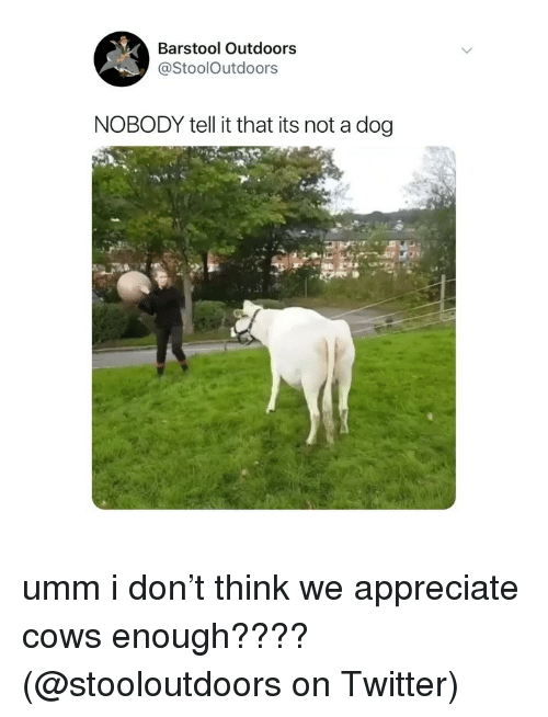 Memes, Twitter, and Appreciate: Barstool Outdoors  @StoolOutdoors  NOBODY tell it that its not a dog umm i don't think we appreciate cows enough???? (@stooloutdoors on Twitter)