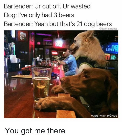 Funny, Yeah, and Got: Bartender: Ur cut off. Ur wasted  Dog: I've only had 3 beers  Bartender: Yeah but that's 21 dog beers  @tank.sinatra  LIVES  MADE WITH MOMUs You got me there