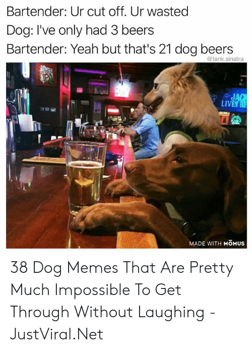 sinatra: Bartender: Ur cut off. Ur wasted  Dog: I've only had 3 beers  Bartender: Yeah but that's 21 dog beers  @tank.sinatra  REBEL  PA  EAT  JAG  LIVES HE  MADE WITH MOMUS 38 Dog Memes That Are Pretty Much Impossible To Get Through Without Laughing - JustViral.Net
