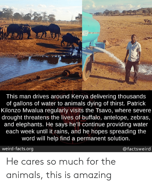Animals, Facts, and Weird: BATER  This man drives around Kenya delivering thousands  of gallons of water to animals dying of thirst. Patrick  Kilonzo Mwalua regularly visits the Tsavo, where severe  drought threatens the lives of buffalo, antelope, zebras,  and elephants. He says hell continue providing water  each week until it rains, and he hopes spreading the  word will help find a permanent solution.  weird-facts.org  @factsweird He cares so much for the animals, this is amazing