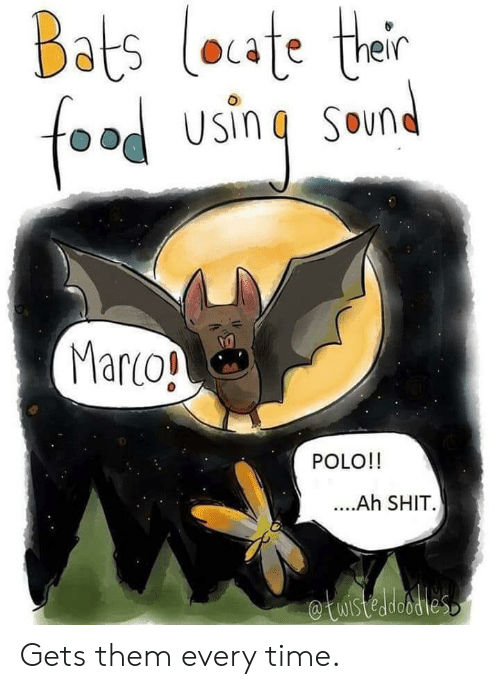 bats: Bats loate their  foad using Smnd  Marco!  POLO!!  ..Ah SHIT  etuistedesties Gets them every time.
