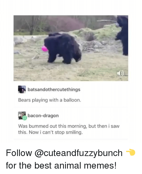 Memes, Saw, and Animal: batsandothercutethings  Bears playing with a balloon.  bacon-dragon  Was bummed out this morning, but then i saw  this. Now i can't stop smiling. Follow @cuteandfuzzybunch 👈 for the best animal memes!