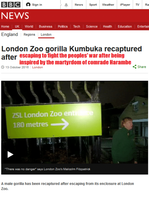 "England, News, and Politics: BBC A sign in  News  Sport:  Weather  Player  TV Ra  NEWS  Home  UK World  Business  Politics Tech Science  Health Education  Entertai  England  Regions  London  London Zoo gorilla kumbuka recaptured  after escaping to fight the peoples war after being  inspired by the martyrdomof comrade Harambe  Share  13 October 2016 London  ZSL London Zoo en  180 metres  ""There was no danger says London Zoo's Malcolm Fitzpatrick  A male gorilla has been recaptured after escaping from its enclosure at London  Z00"