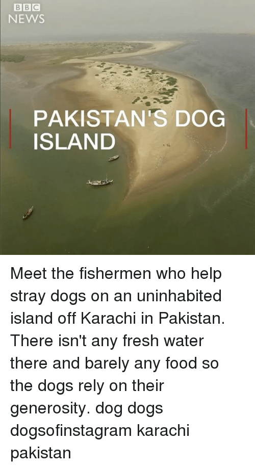 Dogs, Food, and Fresh: BBC  NEWS  PAKISTAN'S DOG  ISLAND Meet the fishermen who help stray dogs on an uninhabited island off Karachi in Pakistan. There isn't any fresh water there and barely any food so the dogs rely on their generosity. dog dogs dogsofinstagram karachi pakistan