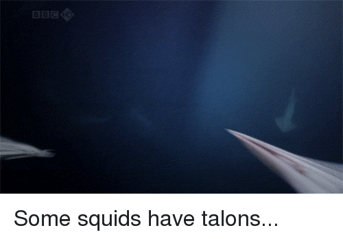 Memes, 🤖, and Talon: BBC Some squids have talons...