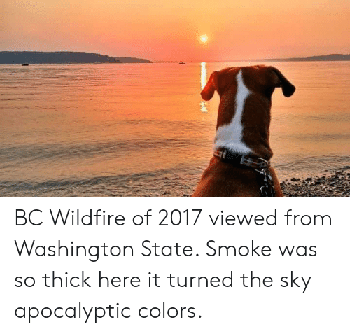 Washington State, Washington, and Sky: BC Wildfire of 2017 viewed from Washington State. Smoke was so thick here it turned the sky apocalyptic colors.
