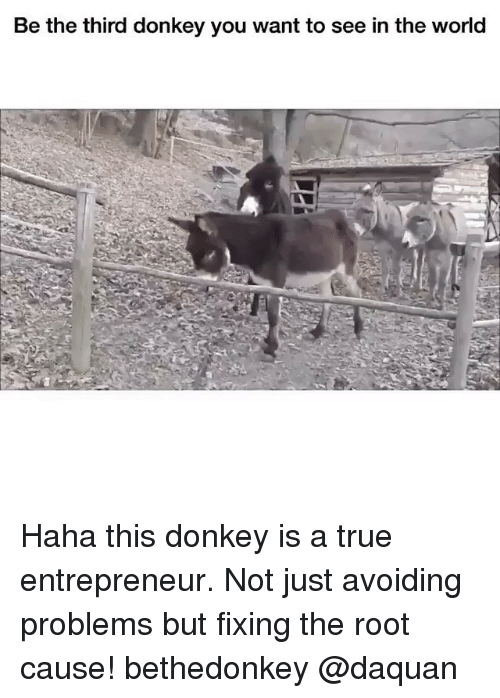 donkeys: Be the third donkey you want to see in the world Haha this donkey is a true entrepreneur. Not just avoiding problems but fixing the root cause! bethedonkey @daquan