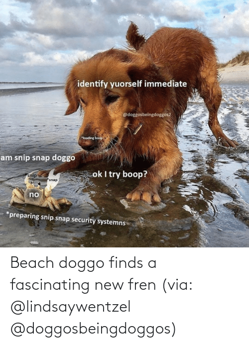 new: Beach doggo finds a fascinating new fren (via: @lindsaywentzel @doggosbeingdoggos)