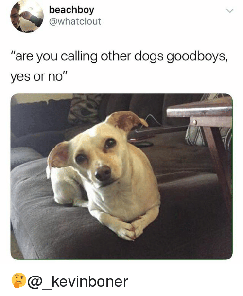 """Dogs, Funny, and Meme: beachboy  @whatclout  """"are you calling other dogs goodboys,  yes or no"""" 🤔@_kevinboner"""