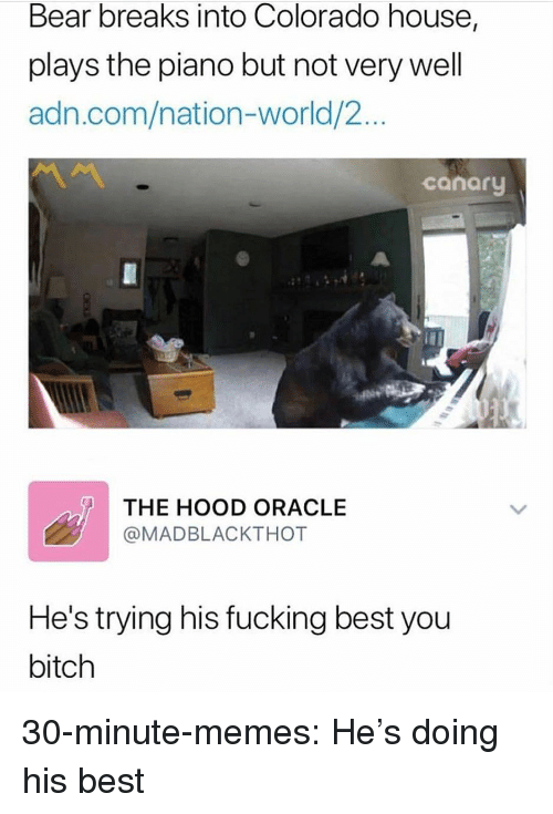 Bitch, Fucking, and Memes: Bear breaks into Colorado house,  plays the piano but not very well  adn.com/nation-world/2...  canary  THE HOOD ORACLE  @MADBLACKTHOT  He's trying his fucking best you  bitch 30-minute-memes:  He's doing his best