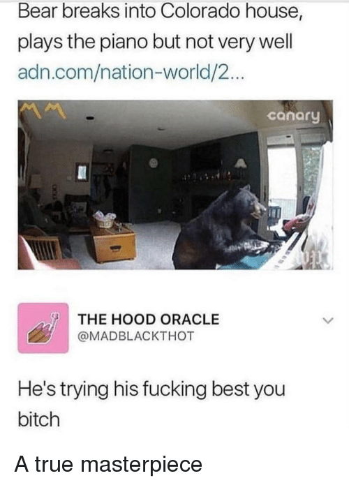 Oracle: Bear breaks into Colorado house,  plays the piano but not very well  adn.com/nation-world/2...  conory  THE HOOD ORACLE  @MADBLACKTHOT  He's trying his fucking best you  bitch A true masterpiece