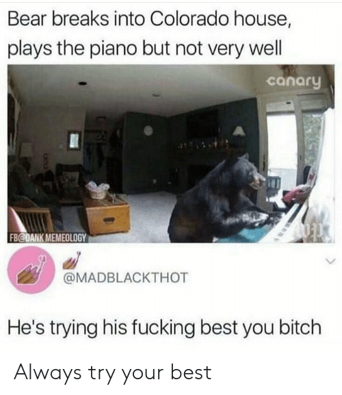 Bitch, Dank, and Fucking: Bear breaks into Colorado house,  plays the piano but not very well  canary  FB@DANK MEMEOLOGY  @MADBLACKTHOT  He's trying his fucking best you bitch Always try your best