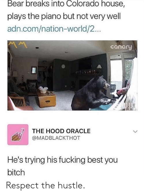 The Hood: Bear breaks into Colorado house,  plays the piano but not very well  adn.com/nation-world/2...  canary  THE HOOD ORACLE  @MADBLACKTHOT  He's trying his fucking best you  bitch Respect the hustle.