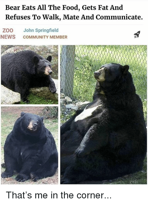 Community, Food, and Funny: Bear Eats All The Food, Gets Fat And  Refuses To Walk, Mate And Communicate.  ZOO John Springfield  NEWS COMMUNITY MEMBER That's me in the corner...