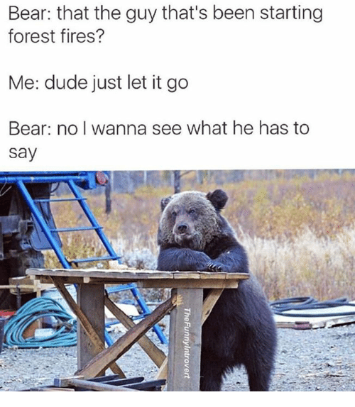 Dank, Dude, and Bear: Bear: that the guy that's been starting  forest fires?  Me: dude just let it go  Bear: no I wanna see what he has to  say