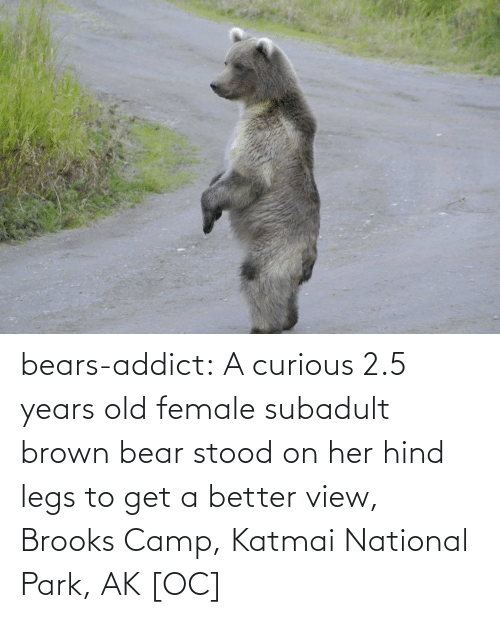 Hind Legs: bears-addict:  A curious 2.5 years old female subadult brown bear stood on her hind legs to get a better view, Brooks Camp, Katmai National Park, AK [OC]