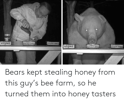 Kept: Bears kept stealing honey from this guy's bee farm, so he turned them into honey tasters