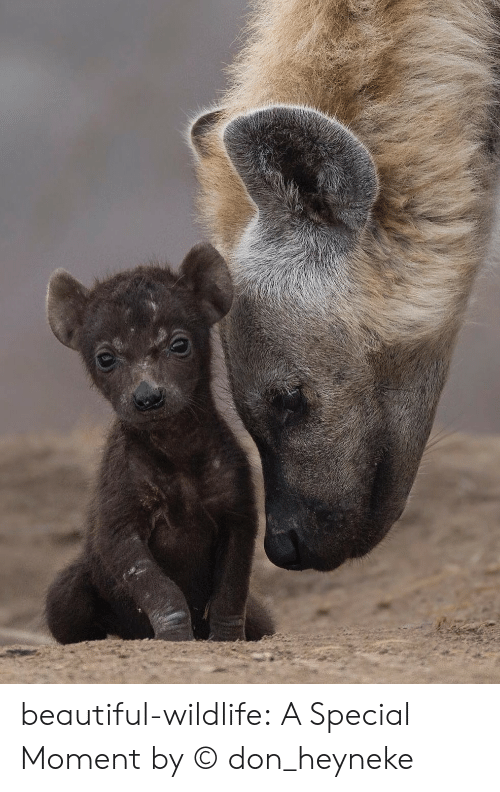 Beautiful, Instagram, and Tumblr: beautiful-wildlife:  A Special Momentby ©don_heyneke