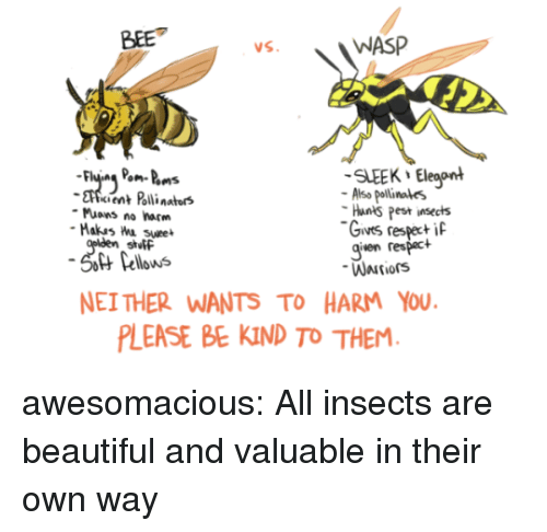 Beautiful, Tumblr, and Blog: BEE  WASP  SLEEK Eleaont  cient Polli nators  Also pollinales  Hants Pest insects  Gives respeci  given respact  Muons no harm  stutF  Pellows  NEI THER WANTS TO HARM YOU  LEASE BE KIND TO THEM awesomacious:  All insects are beautiful and valuable in their own way