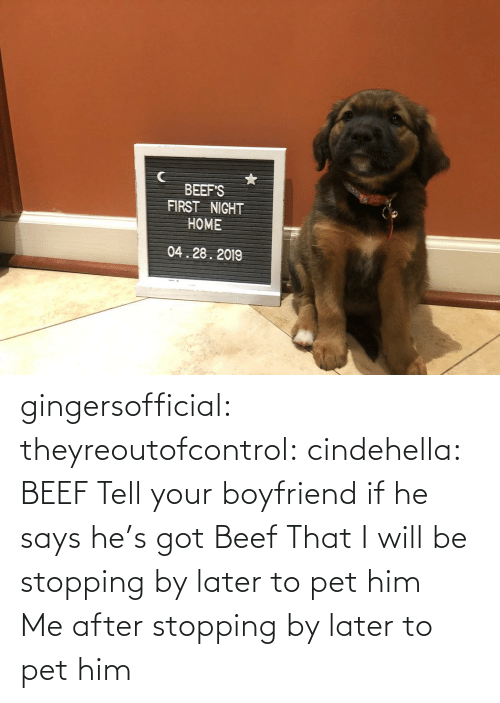 later: BEEF'S  FIRST NIGHT  HOME  04.28.2019 gingersofficial:  theyreoutofcontrol:  cindehella: BEEF Tell your boyfriend if he says he's got Beef That I will be stopping by later to pet him     Me after stopping by later to pet him