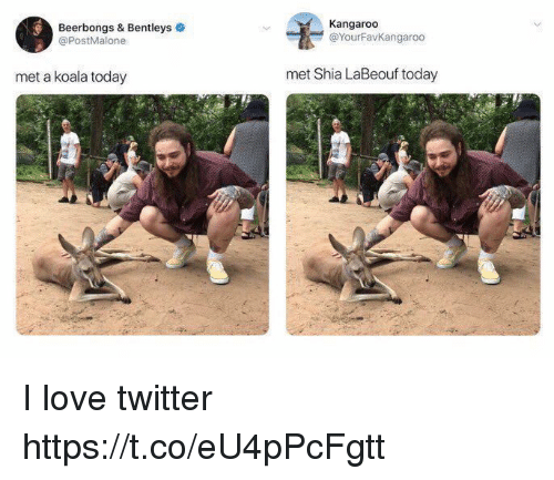 koala: Beerbongs & Bentleys  @PostMalone  Kangaroo  @YourFavKangaroo  met a koala today  met Shia LaBeouf today I love twitter https://t.co/eU4pPcFgtt