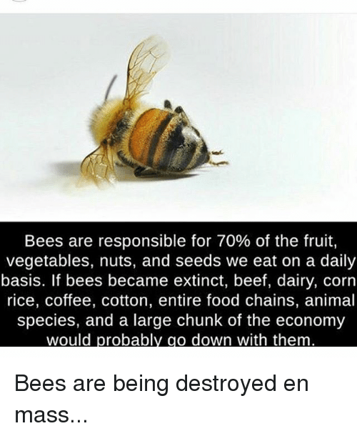 Beef, Memes, and 🤖: Bees are responsible for 70% of the fruit,  vegetables, nuts, and seeds we eat on a daily  basis. If bees became extinct, beef, dairy, corn  rice, coffee, cotton, entire food chains, animal  species, and a large chunk of the economy  would probabl  o down with them Bees are being destroyed en mass...